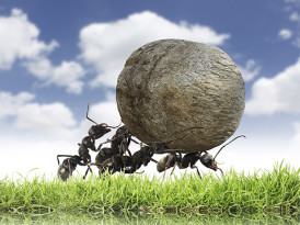 Ants in the lead: A physics-based model can explain how ants cooperate in steering food to their nest