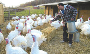 Could turkey poop help stop climate change?