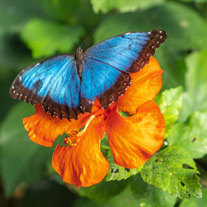Butterfly images resonate: Holocaust, bias and fear make them Shapiro's totem