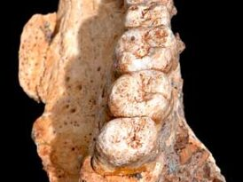Humans in Israel during the Ice Age! Jaw and rodent fossils challenge belief about when man first arrived there